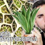 Energía Biofotovoltaica. ¿Se puede obtener energía de las plantas?